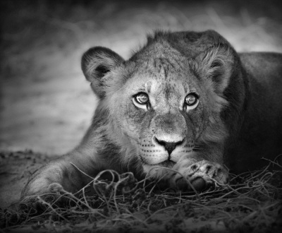 Photography Tips for Your Wildlife Experience