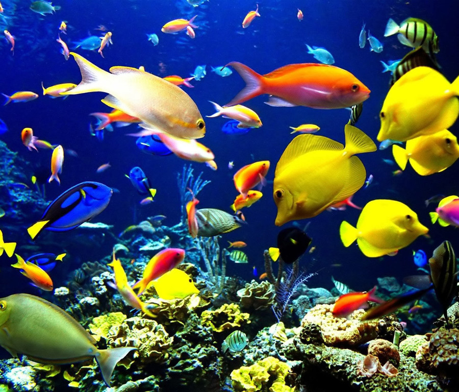 Five of the World's Most Beautiful Coral Reefs - Holiday Bug  Five of the Wor...