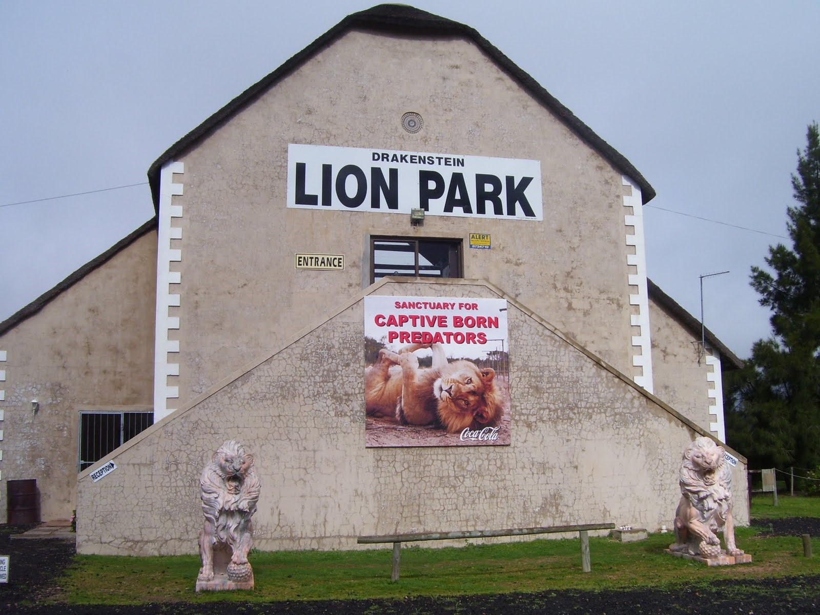 Drakenstein Lion Park safe home for lions