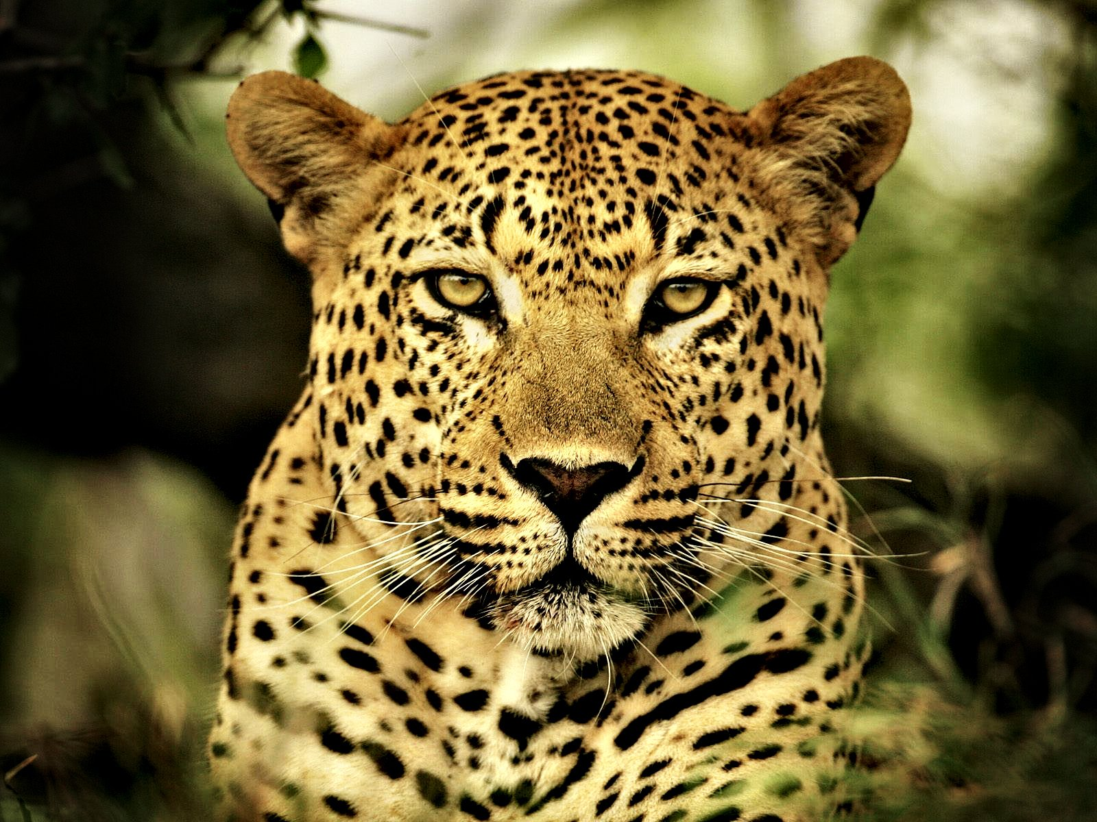 The Call of the Wild: Sounds of the Bushveld