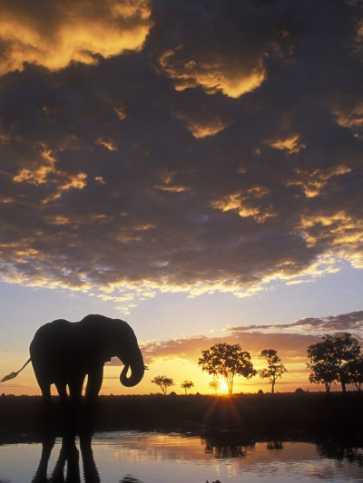 Sunsets around the world: the wonder of the African bush