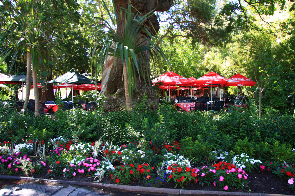 beautiful gardens and parks in Cape Town