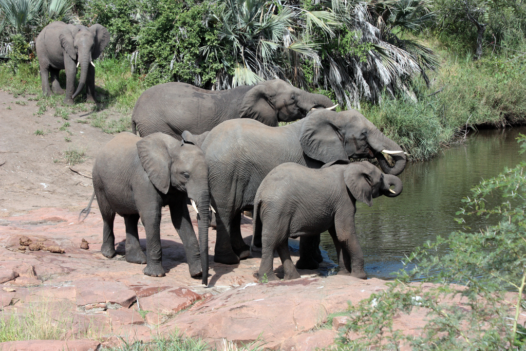When is it the best time to visit the Kruger National Park