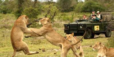 Spectacular safari spots in South Africa