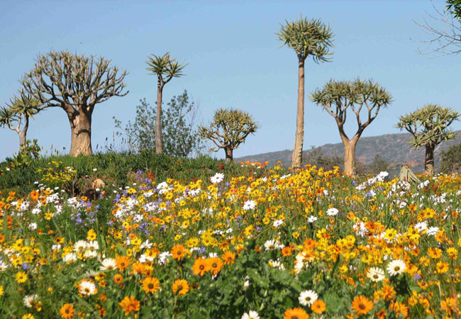 Places in the Western Cape to go see flowers