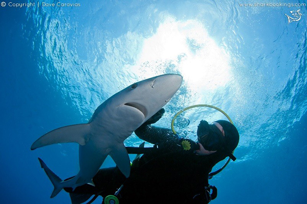 Top four places to try Blue & Mako Shark Diving