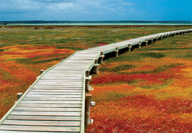 Places in the Western Cape to see flowers