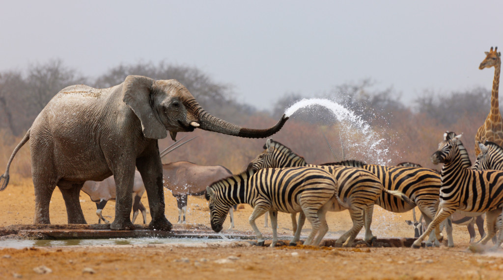 Five beautiful experiences you can expect at Etosha National Park