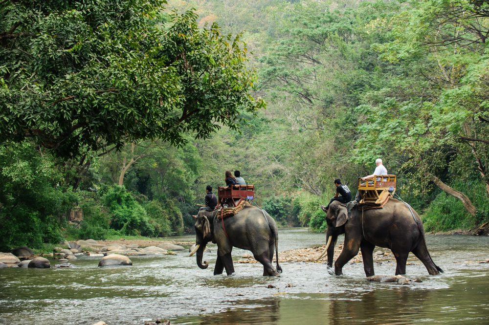 Unconventional safaris to experience across the world