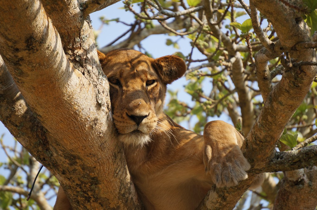 Our top summer safari tips