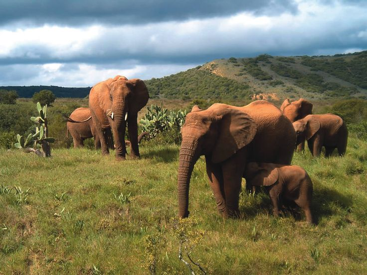 Five wildlife clips captured at Addo Elephant Park