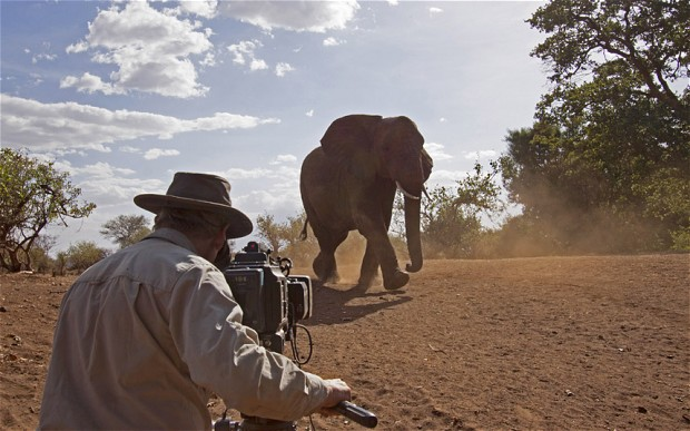 Four nature documentaries that prove Africa is the greatest wilderness in the world