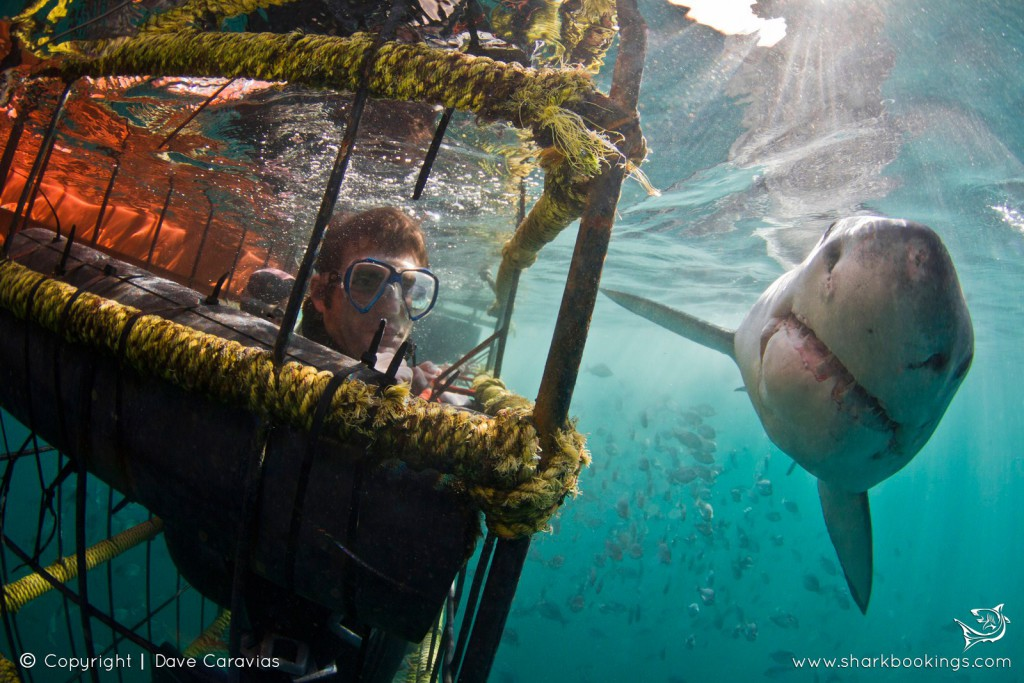 4 Awesome places to go diving with sharks
