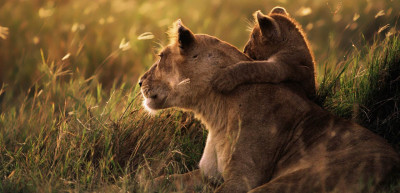 Top 5 safari destinations in the world