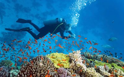 Top 10 Mind Blowing Deep Sea Diving Destinations