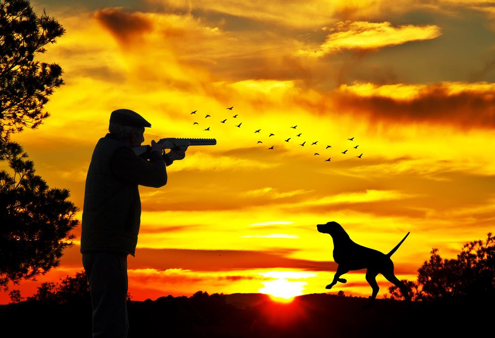 Duck hunting – The Ultimate Guide